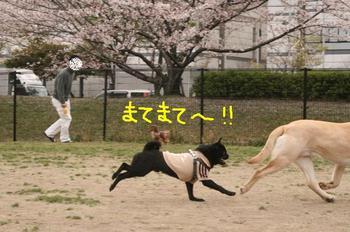 Photo_104
