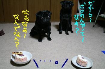 Photo_268