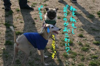 Photo_331