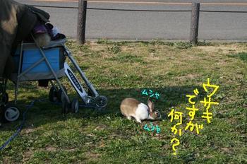 Photo_333