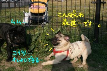 Photo_338