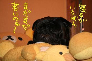 Photo_361