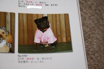 Photo_391