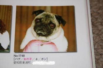 Photo_394
