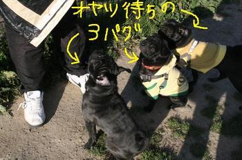 Photo_421