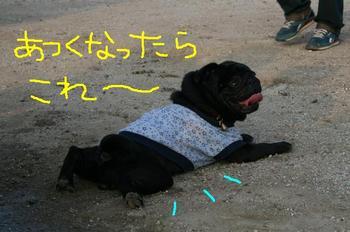 Photo_432