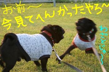 Photo_437