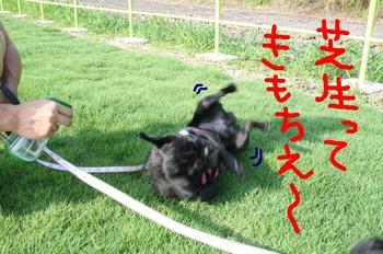 Photo_445