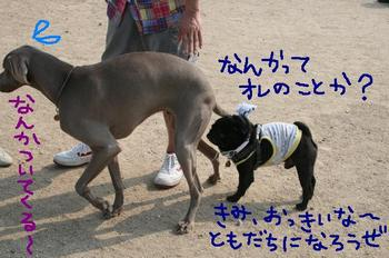 Photo_466