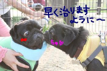Photo_480