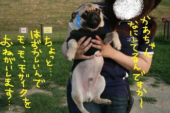 Photo_483